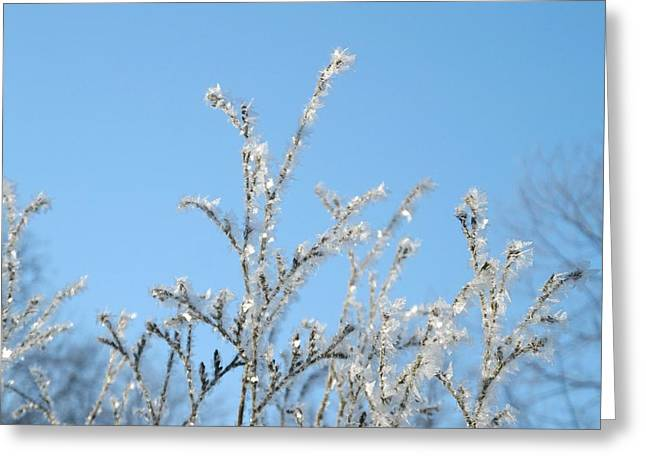 Pause Greeting Cards - Ice tree Greeting Card by Misuk  Jenkins