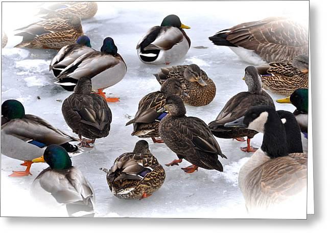 Flocks Of Ducks Greeting Cards - Ice Walkers Greeting Card by Catherine Renzini