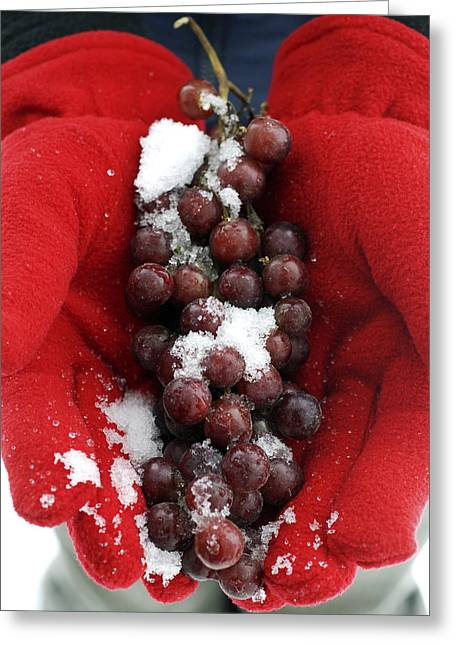 Icewine Greeting Cards - Ice Wine Grapes And Red Gloves Greeting Card by Norman Pogson