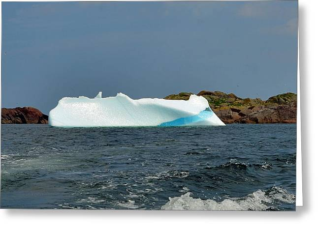Iceberg Greeting Cards - Iceberg off Little Fogo Islands Newfoundland Greeting Card by Lisa  Phillips