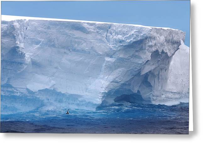 Ocean Vista Greeting Cards - Iceberg with Cape Petrel Greeting Card by Ginny Barklow