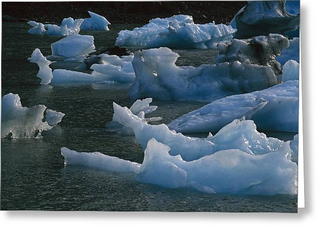 Icebergs Floating In Portage Lake Sc Ak Greeting Card by Ernest Manewal