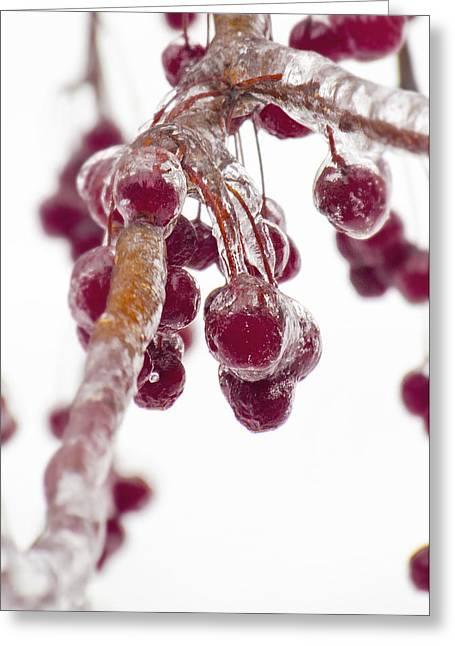 Kim Photographs Greeting Cards - Iced Apples Greeting Card by Kim Leighton