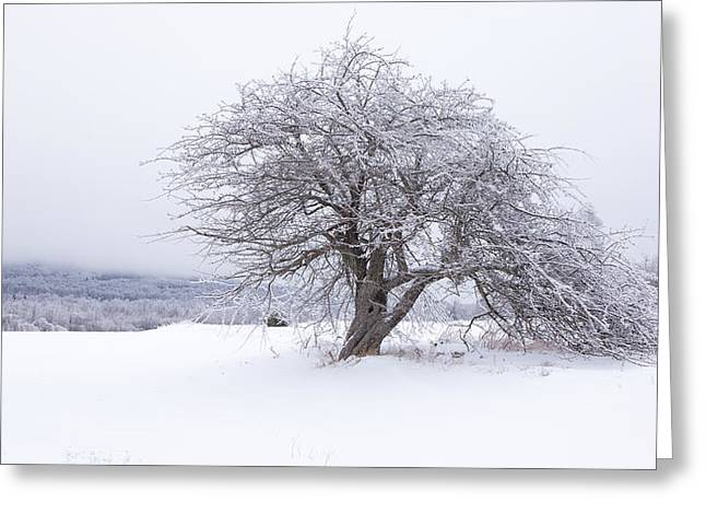 Iced Over Greeting Card by Patrick Downey