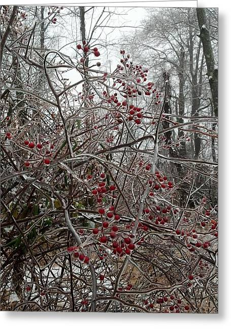 Unprepared Greeting Cards - Iced Red Berries Greeting Card by Mark Victors