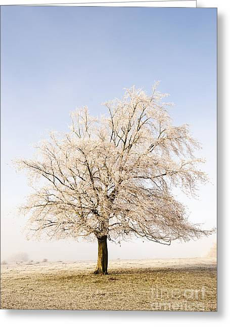 Haze Greeting Cards - Iced Tree Greeting Card by Anne Gilbert