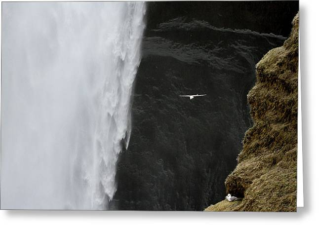 Iceland Seagull Flies Past Skogafoss Greeting Card by Jaynes Gallery