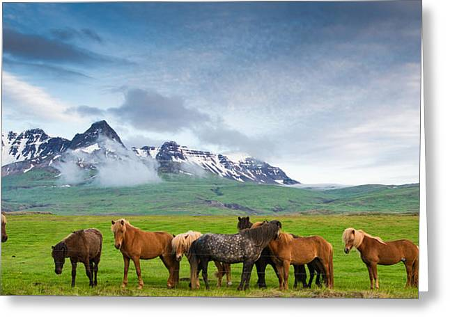 Snow-covered Landscape Greeting Cards - Icelandic horses in mountain landscape in Iceland Greeting Card by Matthias Hauser