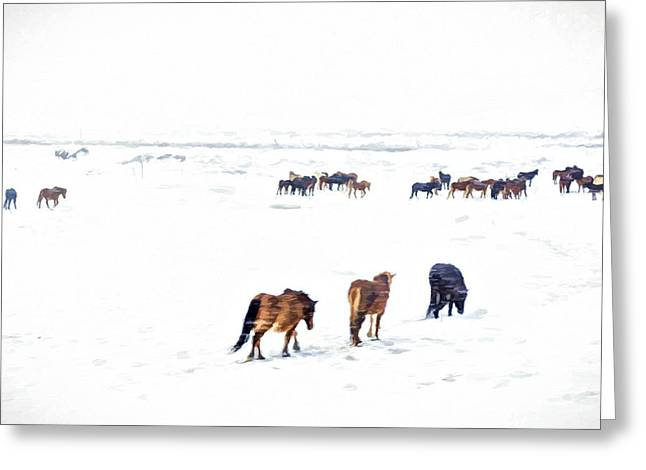 Breeds Greeting Cards - Icelandic Horses Greeting Card by Maria Coulson