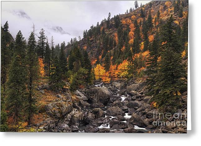 Pacific Northwest Greeting Cards - Icicle Creek Radiance Greeting Card by Mark Kiver