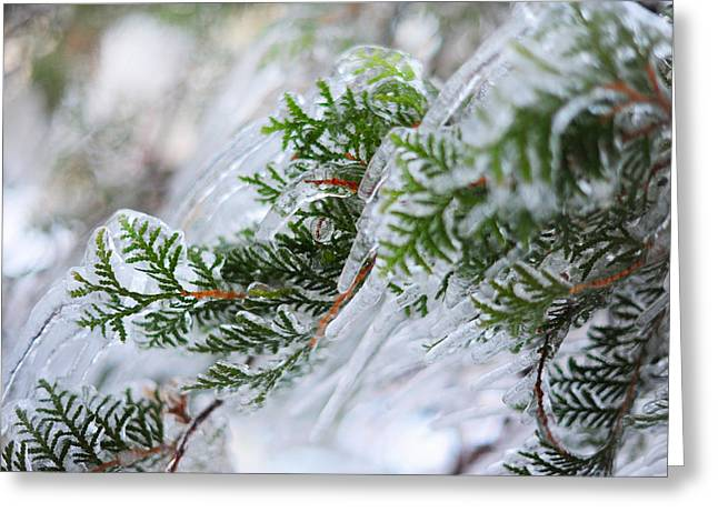 Winter Time Greeting Cards - Icicles on the Juniper Green Branches Greeting Card by Jenny Rainbow