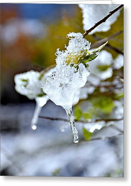 Snowy Day Greeting Cards - Icicles Greeting Card by Rowan Elisa