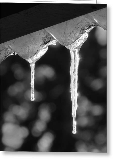 Glacial Greeting Cards - Icicles Greeting Card by Wim Lanclus