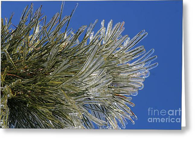 Gingrich Photo Greeting Cards - Icy Branch-7544 Greeting Card by Gary Gingrich Galleries