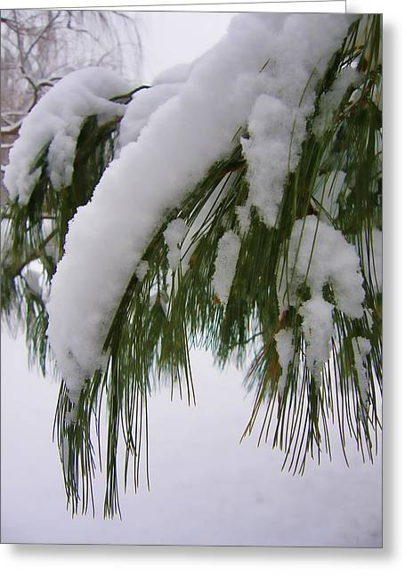 Wayne - New Jersey Greeting Cards - Icy Branch Greeting Card by James Yellen