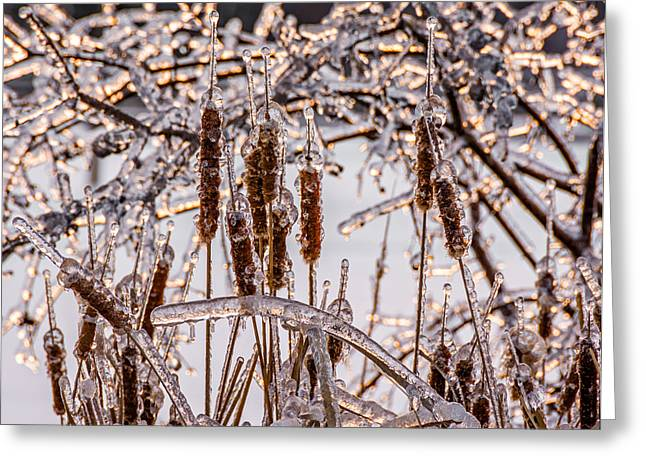 Storm Prints Photographs Greeting Cards - Icy Cattails Greeting Card by Steve Harrington