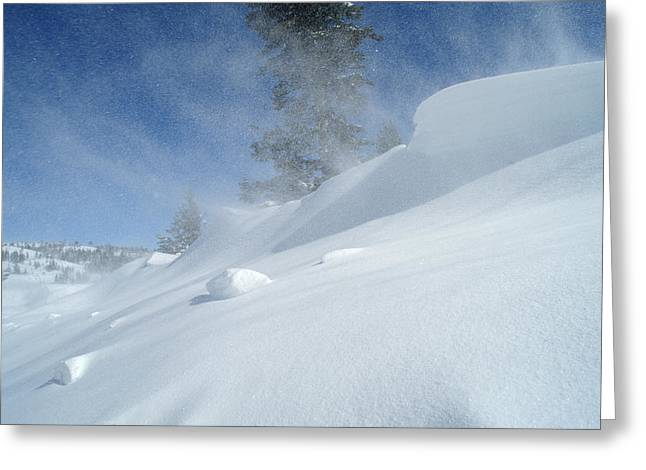 Drifting Snow Greeting Cards - Icy Cold And Windy Greeting Card by Don Bendickson
