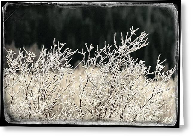 Close Focus Nature Scene Greeting Cards - Icy Fingers Greeting Card by Janice Rae Pariza