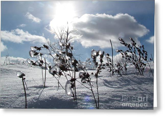 Snow Tree Prints Greeting Cards - Icy land Greeting Card by France Laliberte