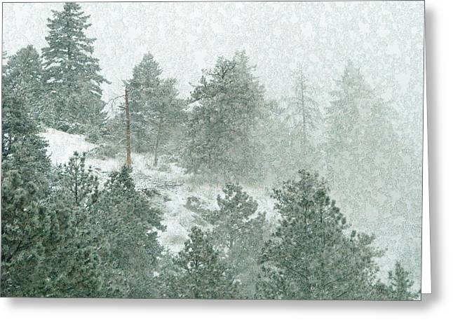 Julie Magers Soulen Greeting Cards - Icy Pine Forest in Colorado Greeting Card by Julie Magers Soulen