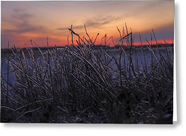 Southern Indiana Greeting Cards - Icy Sunset Greeting Card by Andrea Kappler