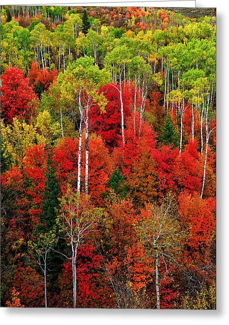 Idaho Photographs Greeting Cards - Idaho Autumn Greeting Card by Greg Norrell