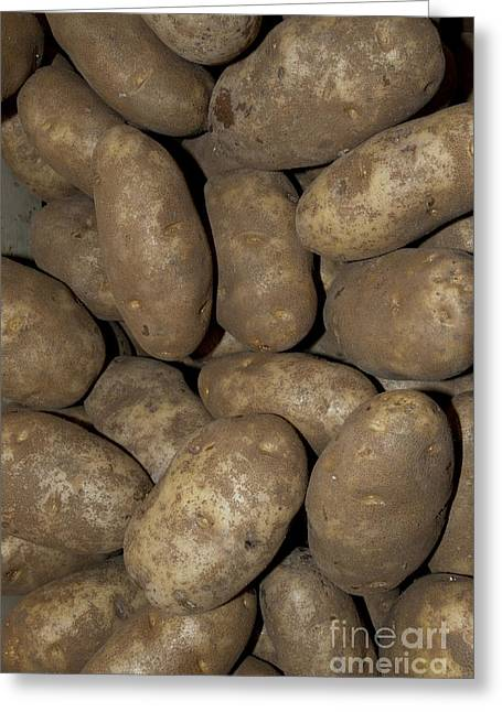 Russet Greeting Cards - Idaho Russet Potatoes Greeting Card by William H. Mullins