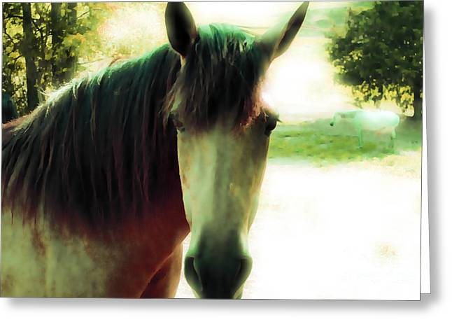 Tennessee Farm Digital Art Greeting Cards - If Horses Could Talk Greeting Card by Anita Faye