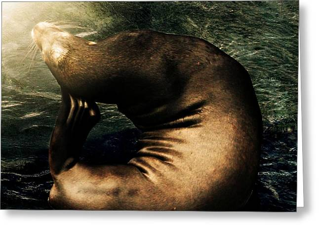 California Sea Lions Greeting Cards - If It Itches Scratch It Greeting Card by CJ Anderson