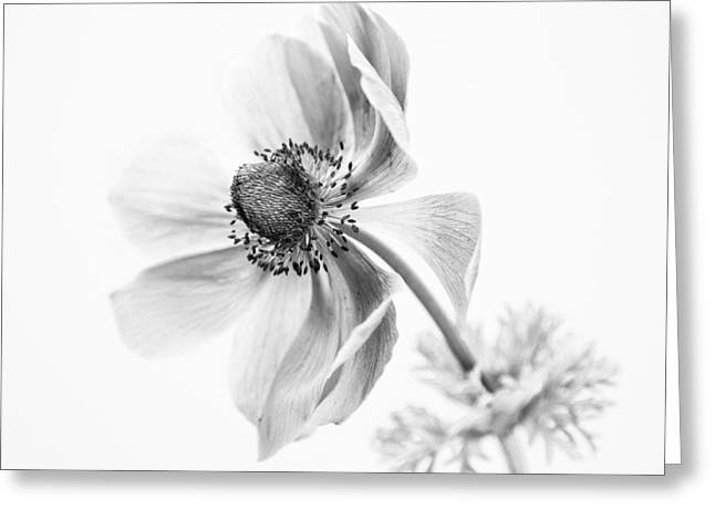 Anemone Greeting Cards - If Only Greeting Card by Constance Fein Harding