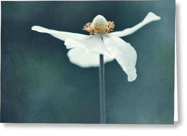 Textured Floral Greeting Cards - If  Petals Were Wings Greeting Card by Priska Wettstein