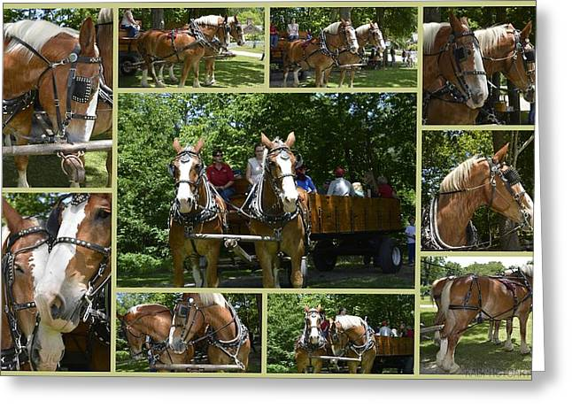 Hayride Greeting Cards - If You Love Belgian Horses Greeting Card by Kathy Barney