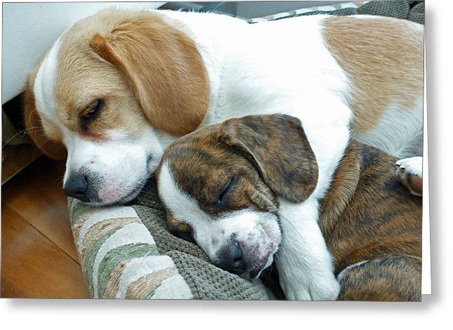Beagle Greeting Cards - Iggy and Bogie Greeting Card by Felix Concepcion