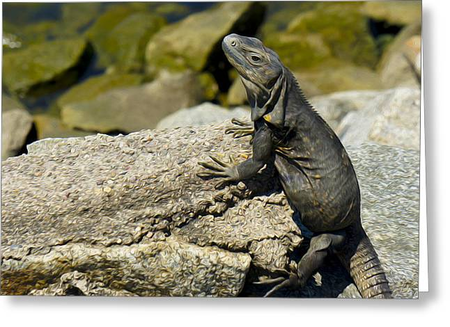 Tropical Wildlife Greeting Cards - Iguana Greeting Card by Aged Pixel