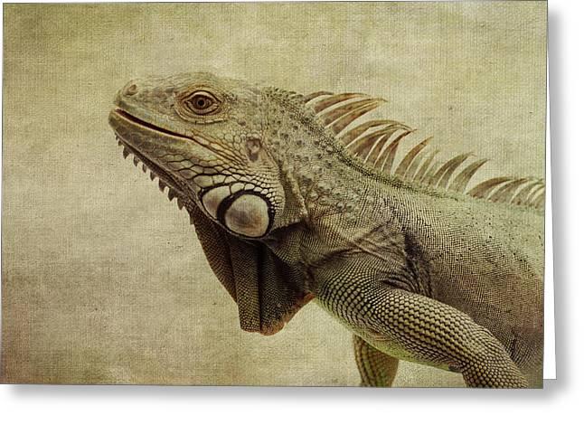 Iguanas Greeting Cards - Iguana Greeting Card by Marina Kojukhova