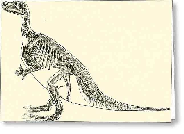 Physical Body Drawings Greeting Cards - Iguanodon Greeting Card by English School