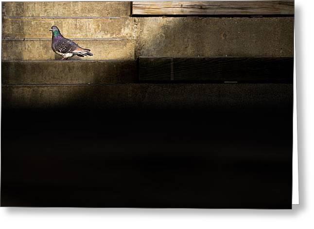 il piccolo guardiano Greeting Card by Bob Orsillo