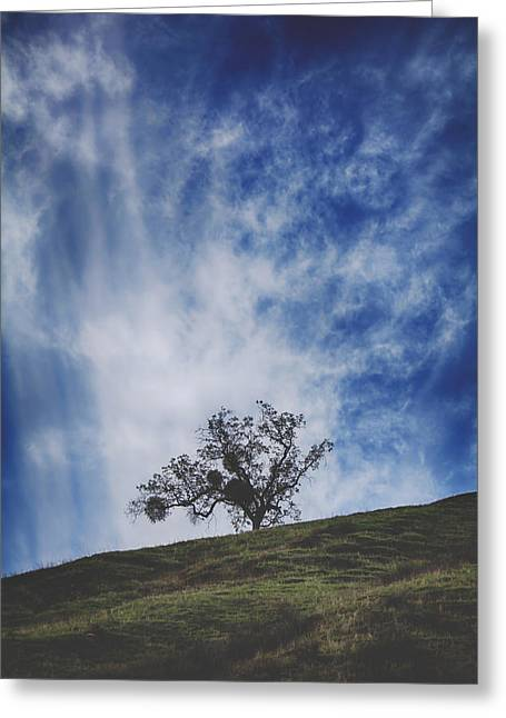 Oak Tree Greeting Cards - Ill Still Be Standing Here Greeting Card by Laurie Search