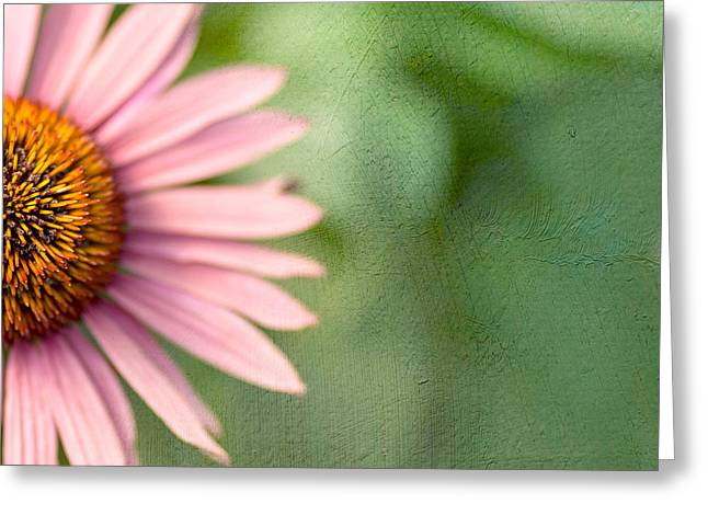 Coneflower Greeting Cards - Ill Take Half Greeting Card by Rebecca Cozart