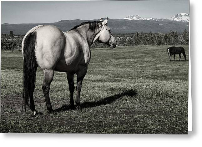 Pasture With Snow Greeting Cards - Ill Wait Greeting Card by Nichon Thorstrom