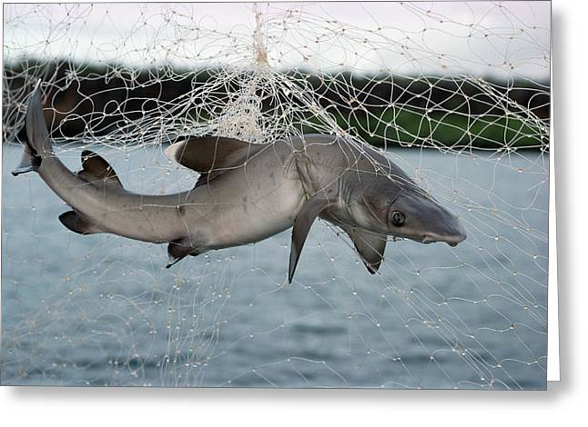 Gill Netter Greeting Cards - Illegal Gillnet Fishing Academy Bay Greeting Card by Tui De Roy