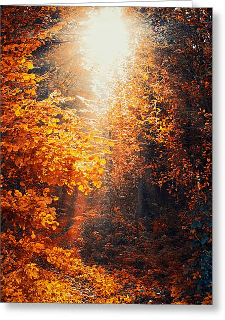 Decor Photography Greeting Cards - Illuminated Forest Greeting Card by Wim Lanclus