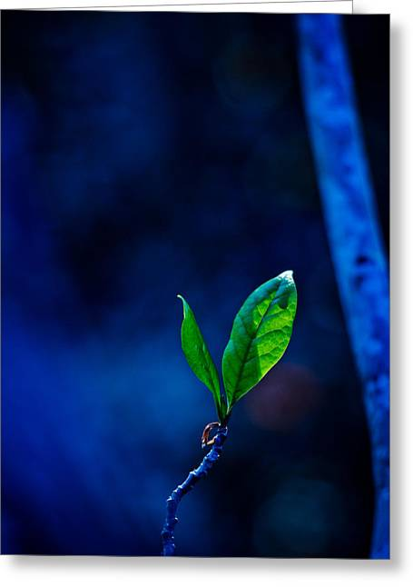 Blue And Green Greeting Cards - Illumination Greeting Card by Linda Unger