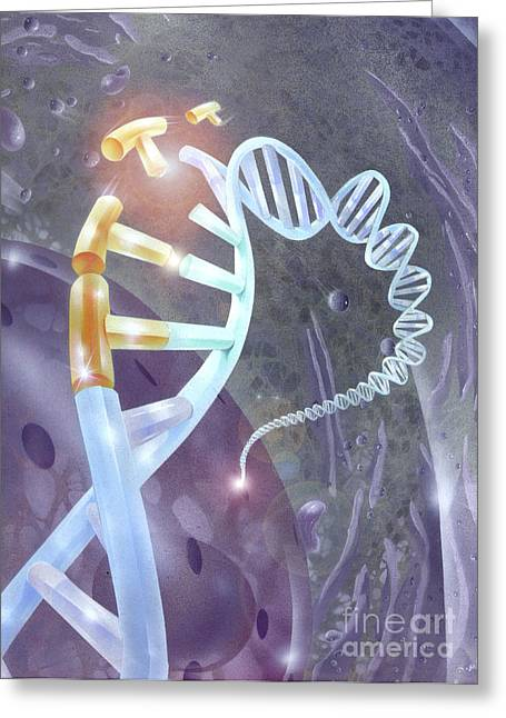 Helix Greeting Cards - Illustration Depicting Genetic Greeting Card by Jim Dowdalls