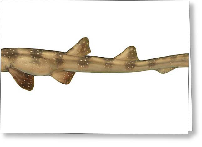 Fish Digital Greeting Cards - Illustration Of A Bamboo Shark, White Greeting Card by Carlyn Iverson