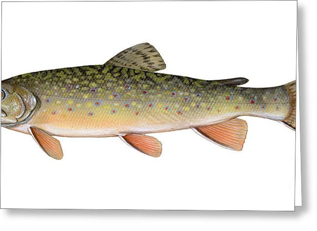 Brook Trout Image Greeting Cards - Illustration Of A Brook Trout Greeting Card by Carlyn Iverson