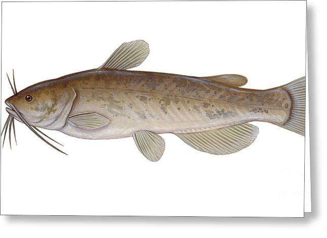 Illustration Of A Brown Bullhead Greeting Card by Carlyn Iverson