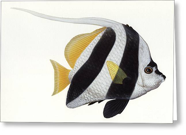 Illustration Of A Pennant Coralfish Greeting Card by Carlyn Iverson