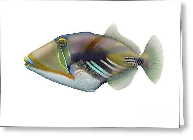Recently Sold -  - Sea Animals Greeting Cards - Illustration Of A Picasso Triggerfish Greeting Card by Carlyn Iverson