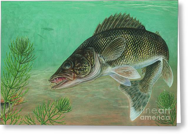 Pickerel Greeting Cards - Illustration Of A Walleye Swimming Greeting Card by Carlyn Iverson